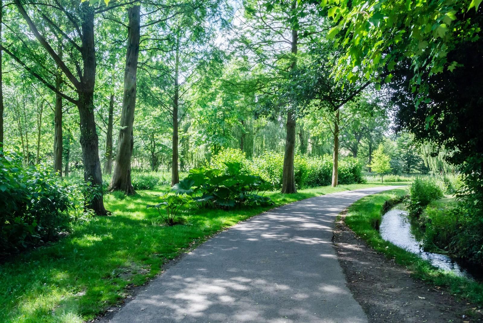 木々の小道