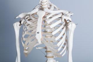 骨格標本写真