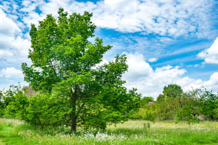 木と青空の写真