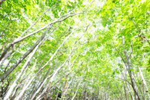 木漏れ日の写真小さい
