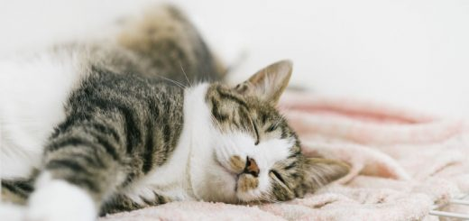 猫が寝ている写真