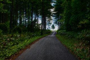森の中の一本道
