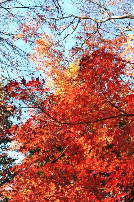 高尾山 12月の紅葉