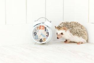 時計とハリネズミの写真