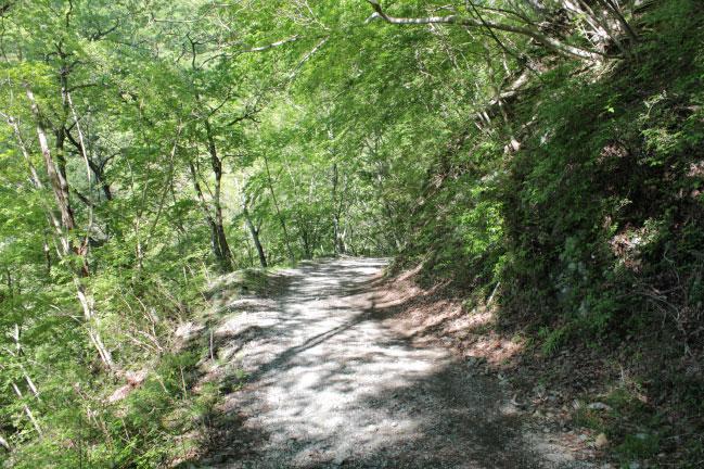 鍋割山 序盤の林道