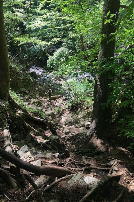 鍋割山 中盤の滝登り
