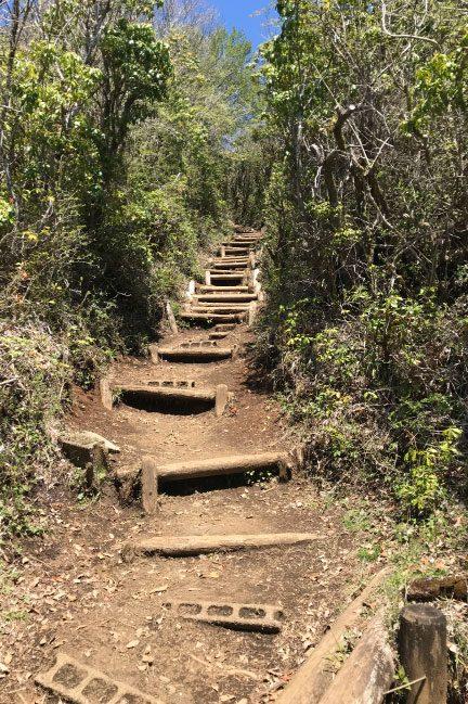 鍋割山 終盤の急登