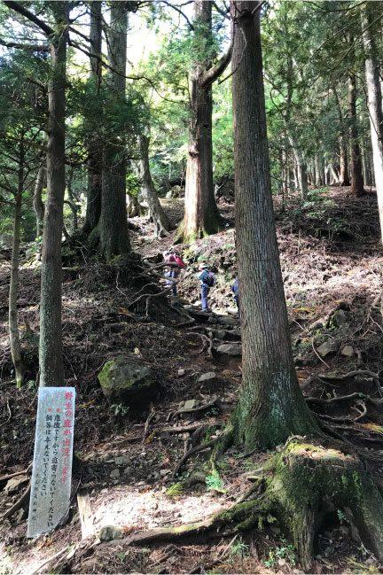 神奈川県丹沢山系大山の登山道