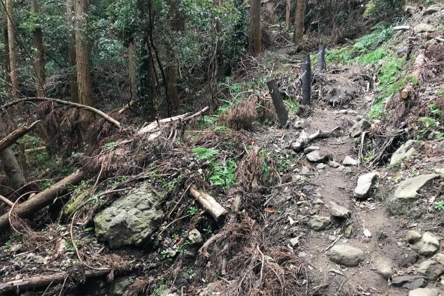 2020年1月の伊予ヶ岳登山道。2019年台風の爪痕残る
