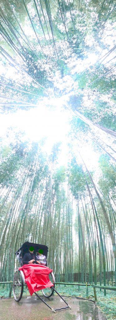 2020年2月 京都嵐山の竹林を人力車から撮影