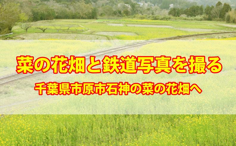 千葉県市原市石神の菜の花畑TOP画像