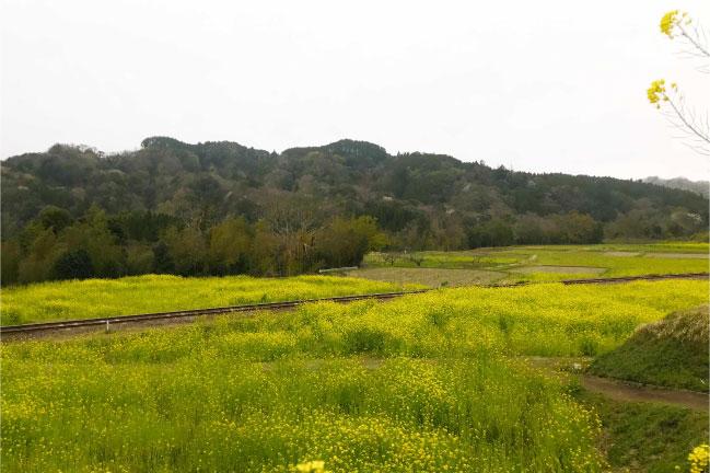 千葉県市原市石神の菜の花畑