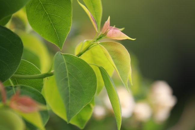 EF70-200mmF4L試作 植物写真