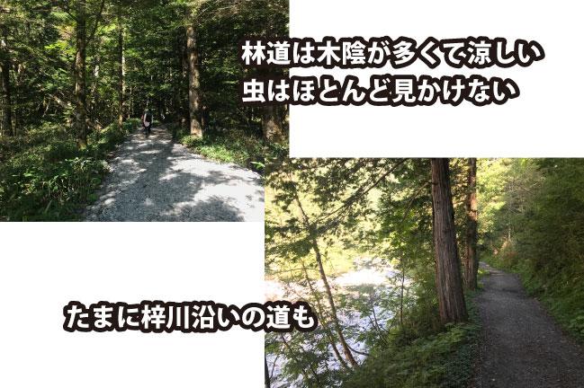 2020年9月中旬の上高地~徳沢までの林道