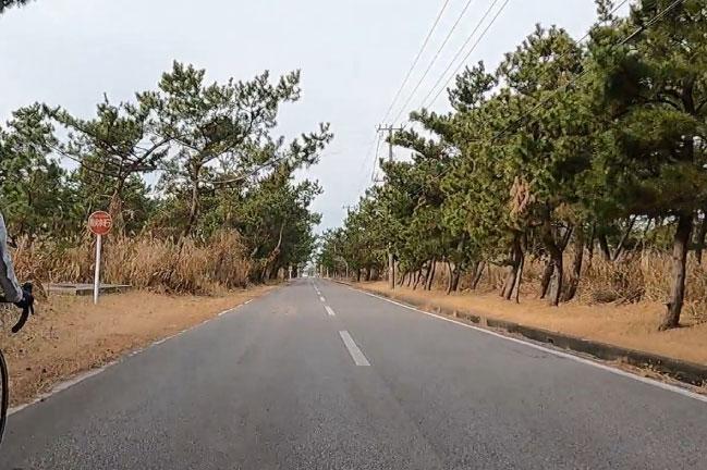 富津岬への松林の直線道路
