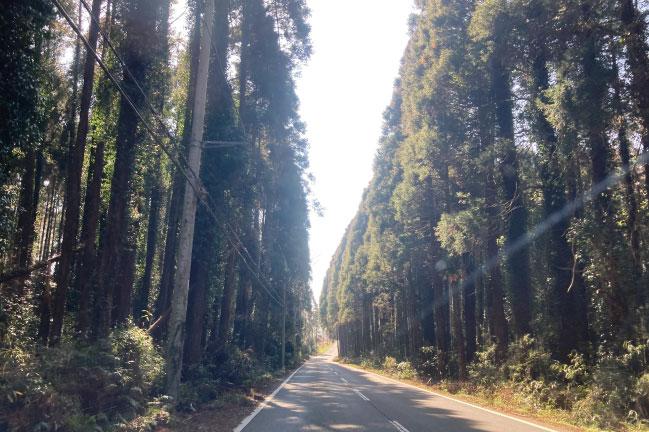 ながら周回コースの林道